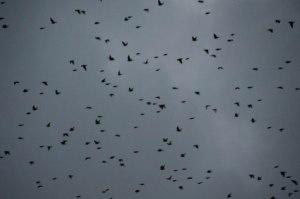 Rough Tor Birds (15 of 76)