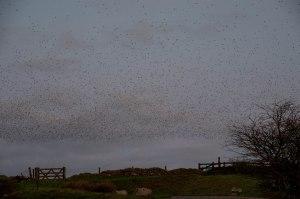 Rough Tor Birds (6 of 98)